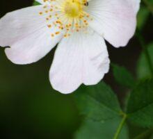 White Flower Bush Sticker