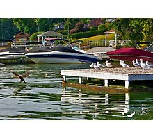 Boats and Birds Photographic Print