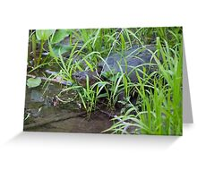 Turtle in Water Greeting Card