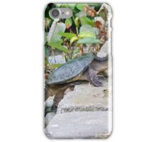Turtle Climbing iPhone Case/Skin