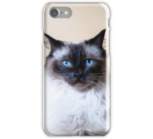 Miaow! iPhone Case/Skin