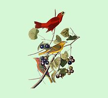Vintage Bird Art Tanagers by pjwuebker
