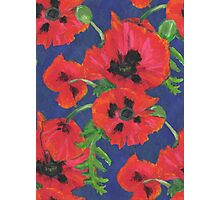 Bright Red Oriental Poppies Floral Pattern Blue Photographic Print