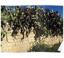 Cactus on Gozo, Malta Poster
