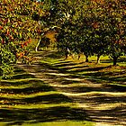 Avenue of Pears in Autumn by Gabrielle  Lees
