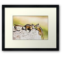 Chipmunk Love Framed Print