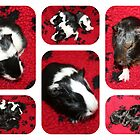 Both Guinea Pig Litters  by AnnDixon