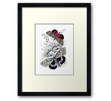 Vintage Butterfy Art Framed Print