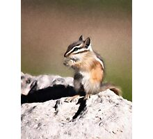 Just A Little Nibble Photographic Print