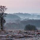 Frosty Tree - Waldridge Fell. UK by David Lewins