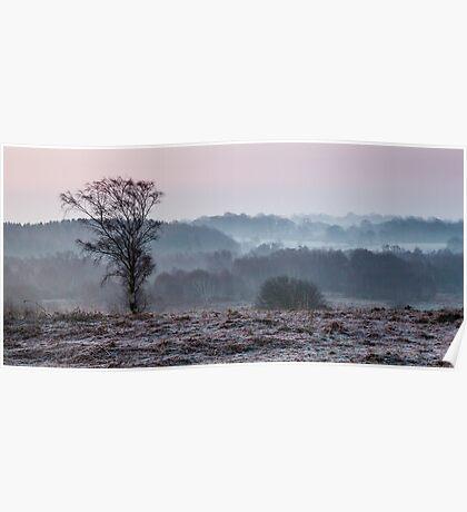 Frosty Tree - Waldridge Fell. UK Poster