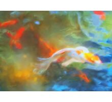 Calm Koi Photographic Print