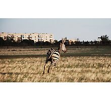 Zebra in the city Photographic Print