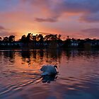 Roath Park by Paula J James