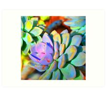 Succulent Color - Botanical Art By Sharon Cummings Art Print