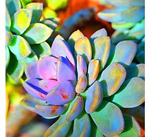 Succulent Color - Botanical Art By Sharon Cummings Photographic Print