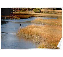 Golden Marsh Poster