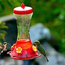 The Hummingbird Feeder??? by imagetj