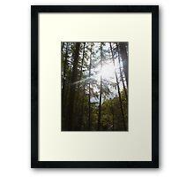 Streaming Sunlight Framed Print