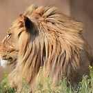The King by Gene Praag