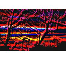 Red Trees Photographic Print