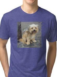 Louie the Shorkie-Tzu : Shih Tzu Yorkshire Terrier (Yorkie) Mix Tri-blend T-Shirt