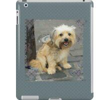 Louie the Shorkie-Tzu : Shih Tzu Yorkshire Terrier (Yorkie) Mix iPad Case/Skin