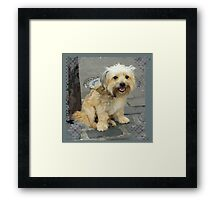 Louie the Shorkie-Tzu : Shih Tzu Yorkshire Terrier (Yorkie) Mix Framed Print