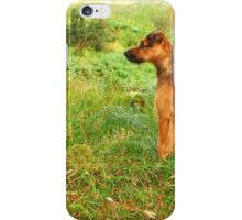patterdale terrier in the hills iPhone Case/Skin