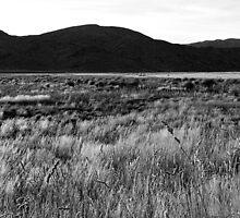 Sedgemere grassland by Duncan Cunningham