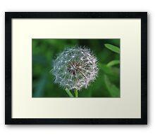 Dandelion and Seeds Framed Print