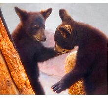 Dancing Bears Photographic Print