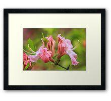 Azalea Color Framed Print
