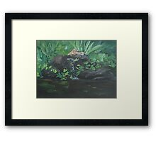Fountain at the Zoo AC151223b-13 Framed Print