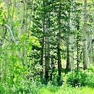 Forest Greens by marilyn diaz