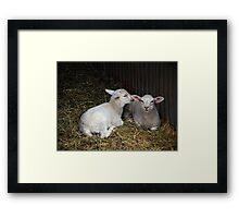 Quite clearly an amusing secret Framed Print