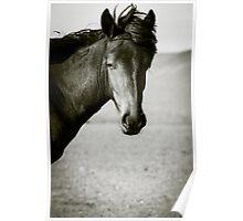 Horse, Gobi Desert, Mongolia Poster