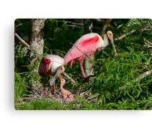 Roseate Spoonbill Family Canvas Print