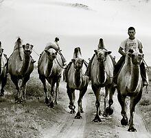 Camels being led back to camp, Khongoryn Els, Gobi Desert, Mongolia by jennyjones