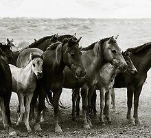 Horses congregate during festival, Gobi Desert, Mongolia by jennyjones