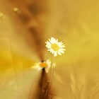 *Sunshine and Daisies* by DeeZ (D L Honeycutt)