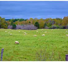 Nova Scotian Sheep in Autumn by BrasdOrLife