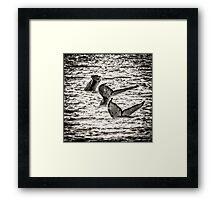 Diving Humpback  Framed Print