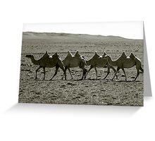 Camels trekking at sunset, Gobi Desert, Mongolia Greeting Card
