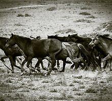 Horses cantering across Gobi Desert, Mongolia by jennyjones