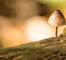 The Littlest Fungus by OzPhoto