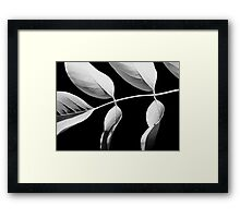 Robinia in Black & White Framed Print