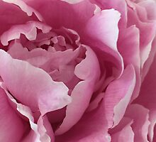 Sweet as Cotton Candy by Sherry Hallemeier