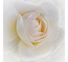 Snow White - the Rose Photographic Print