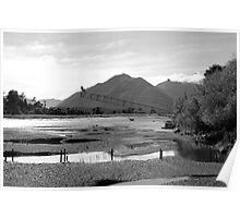 Haast Whitebait Stands Poster